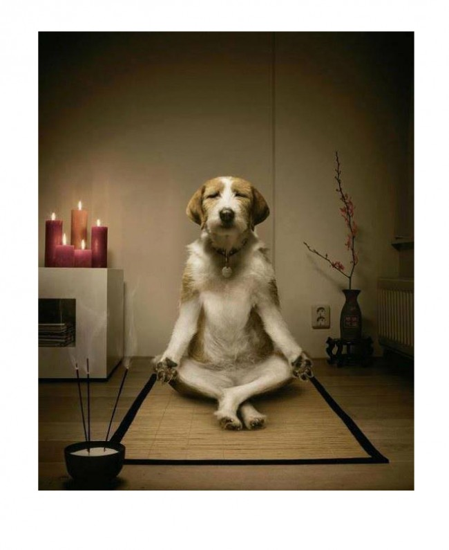 Meditating dog. Thanks, Margie! (I can tell just looking at this that the dog is better at meditating than I am.)