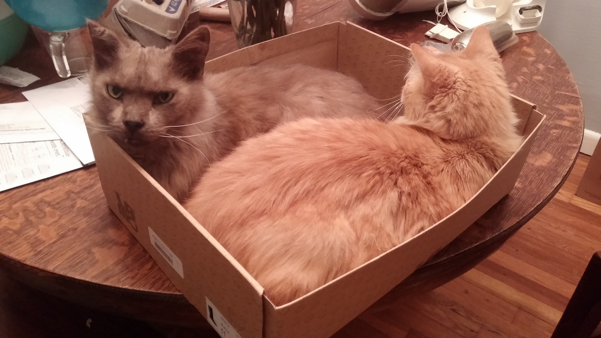 Meepers and Henry believe that as long as you still fit in boxes, there is no need to exercise.