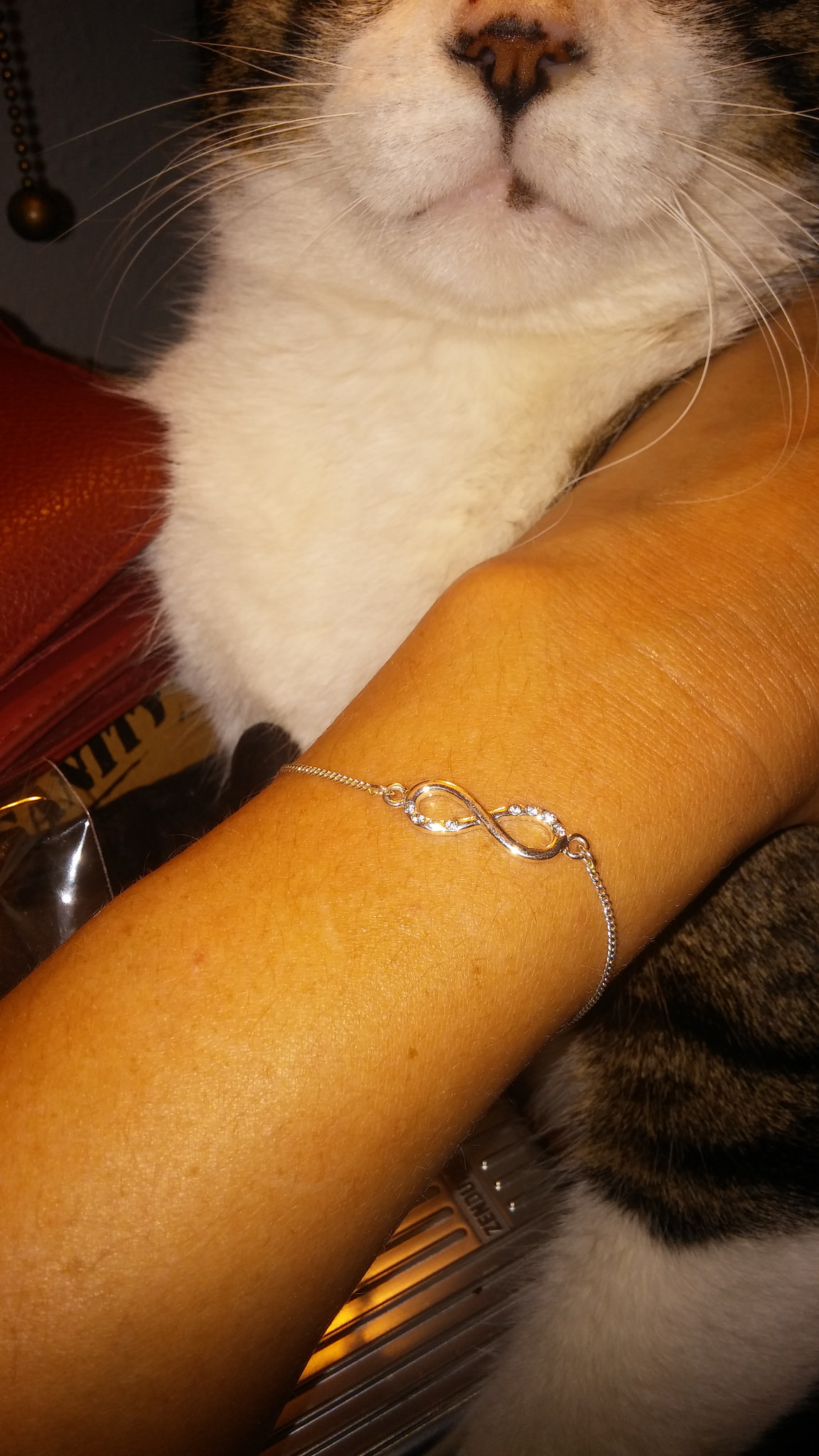 The reminder bracelet and Ed's cute little snout.