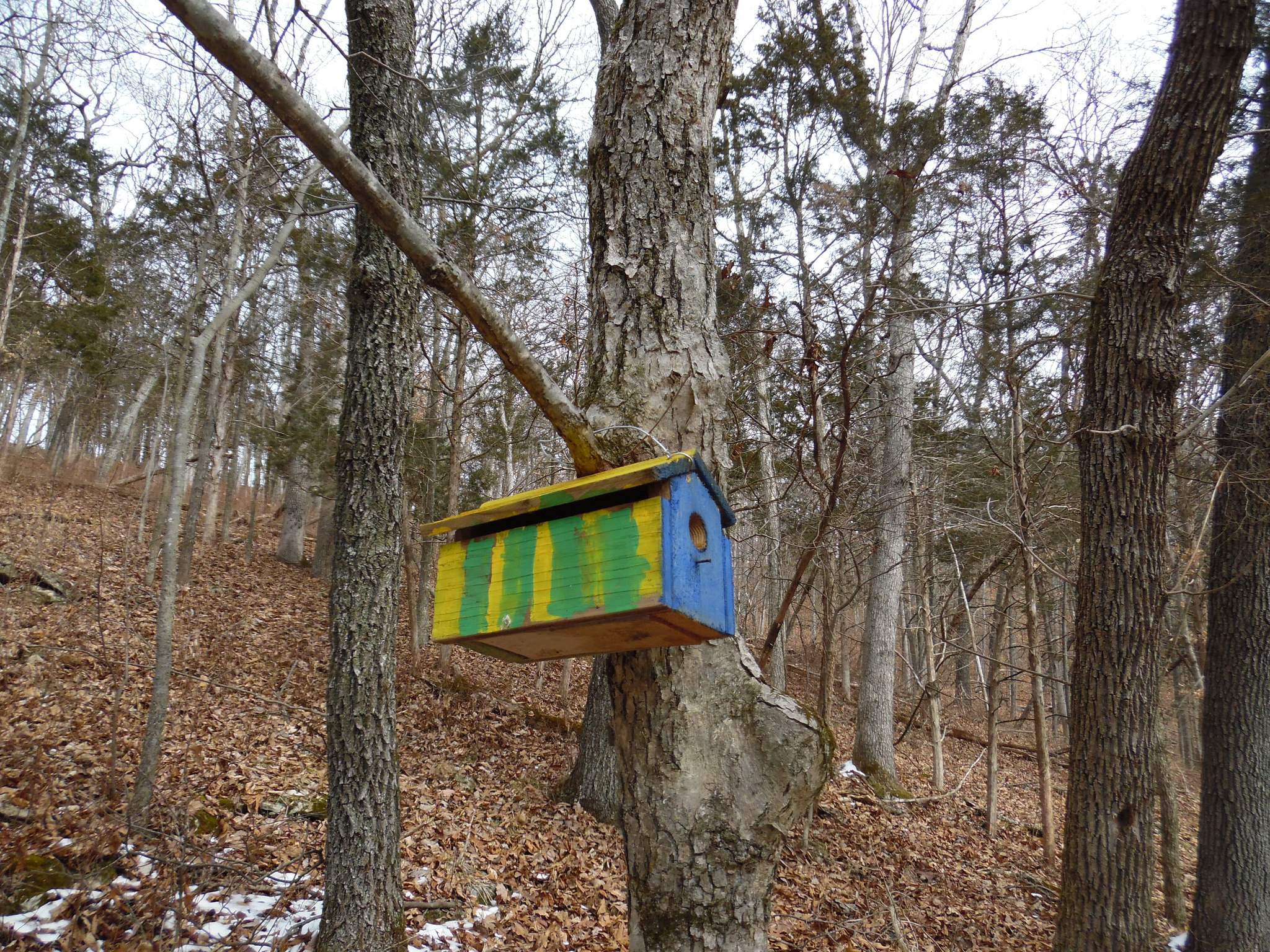 There were lots of these colorful little birdhouses at West Tyson and they were the only color we saw.