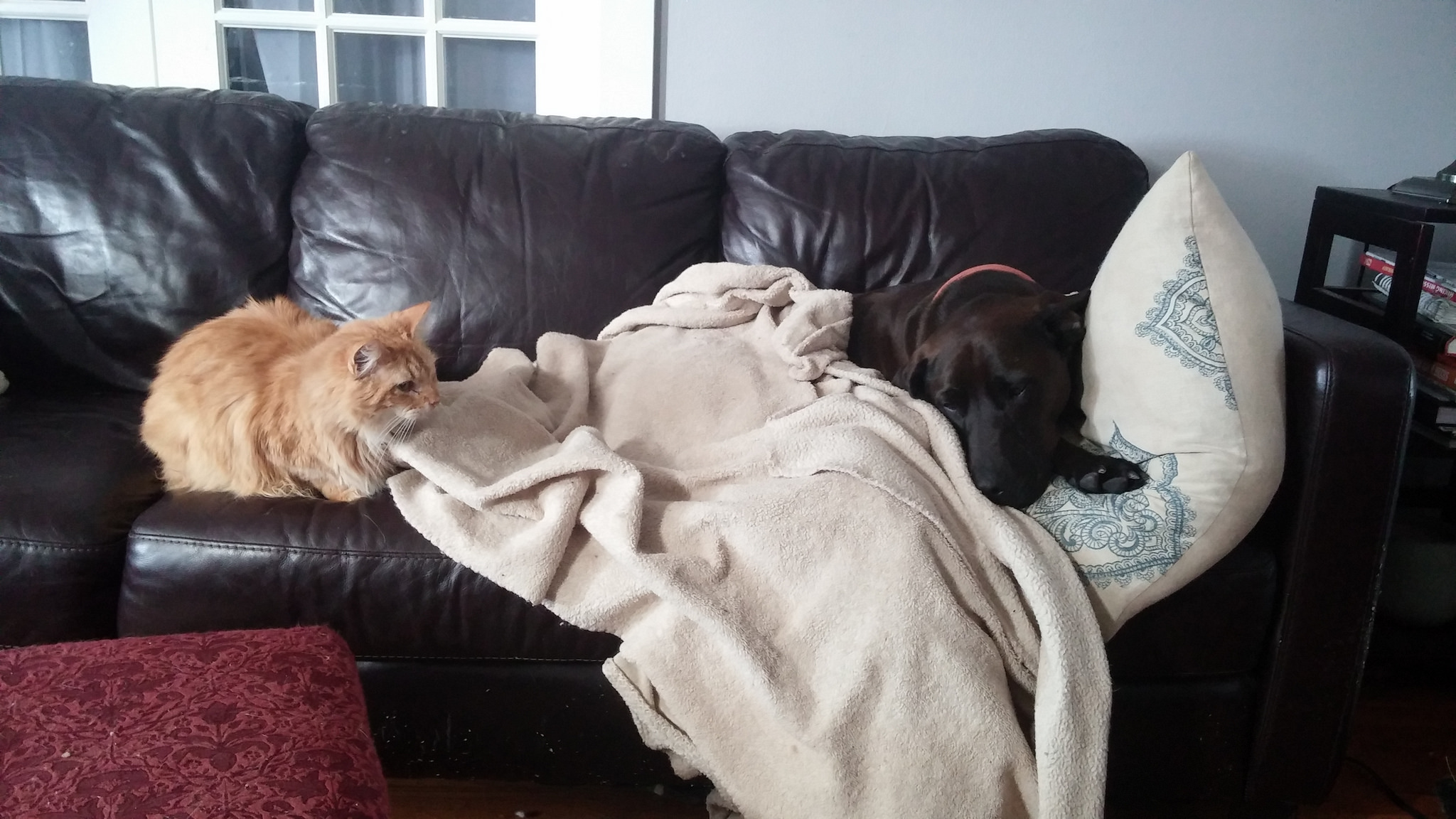 Sorry, Hazel. It would not be frugal to get a separate couch for the cats so that you wouldn't have to share.