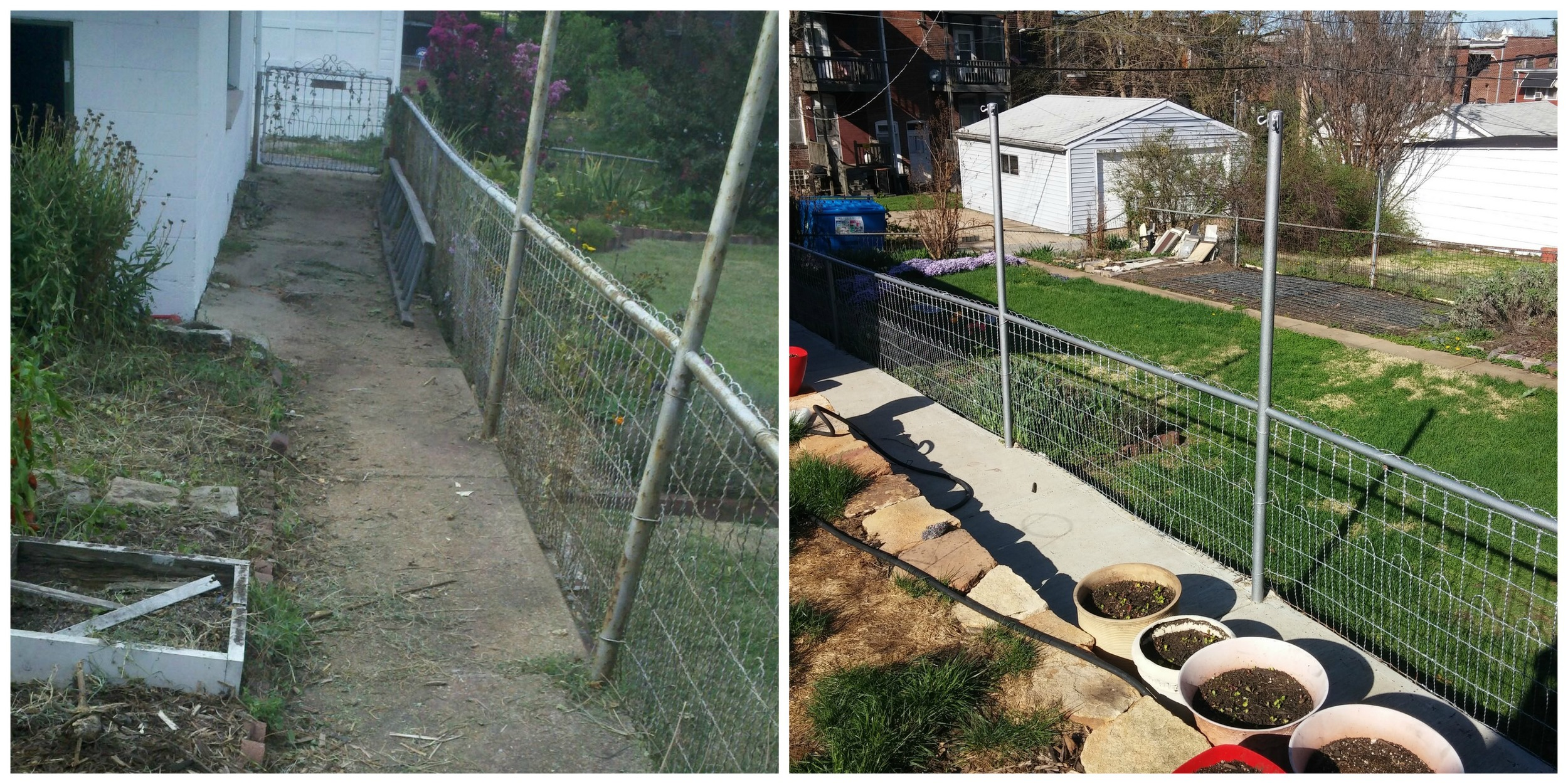 On the left: the fence a couple years ago when we were getting ready to replacethe sidewalk. On the right: the fence today, along with the new sidewalk.