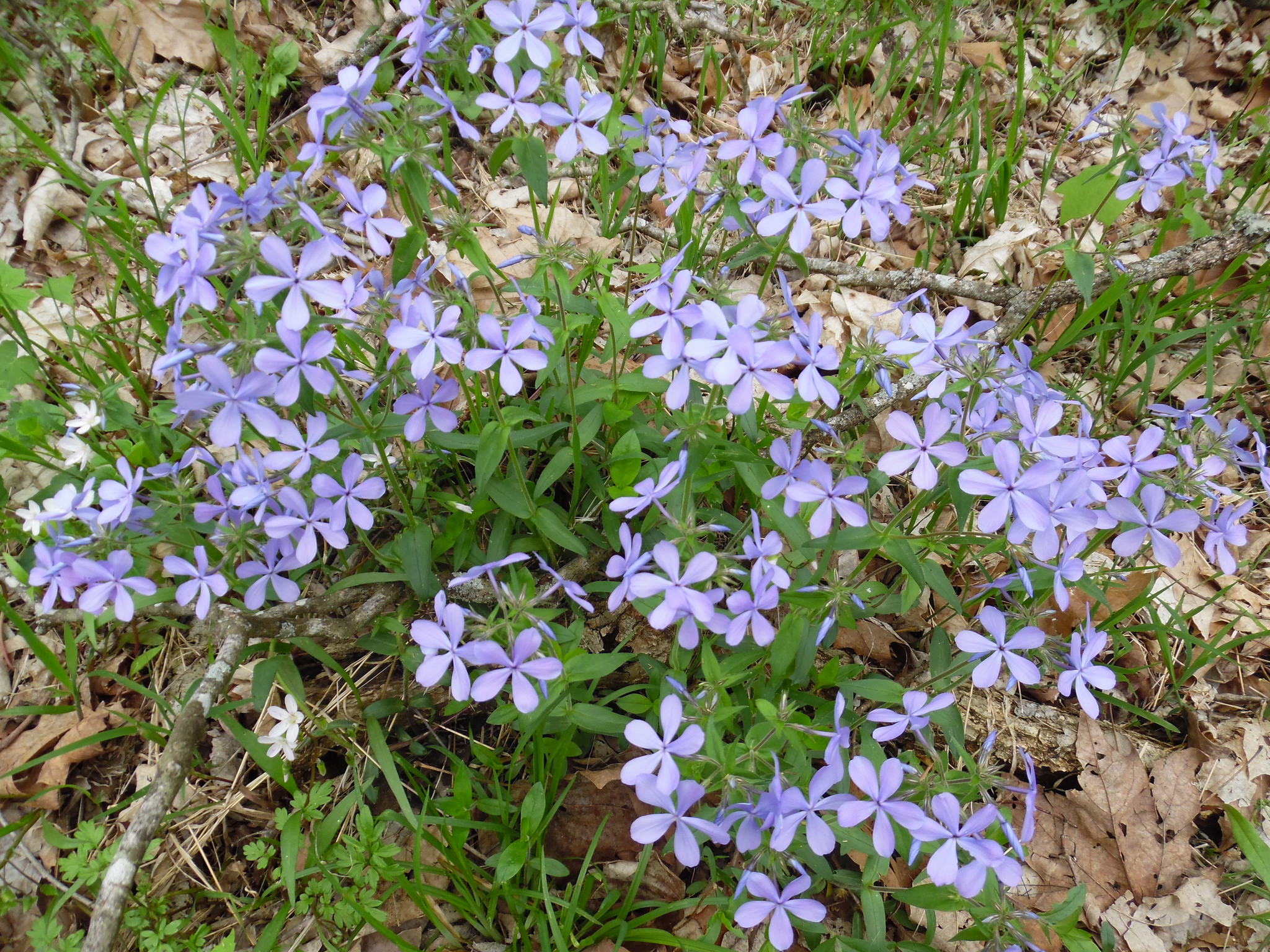 This phlox has nothing to do with food logs, but it sure is pretty.