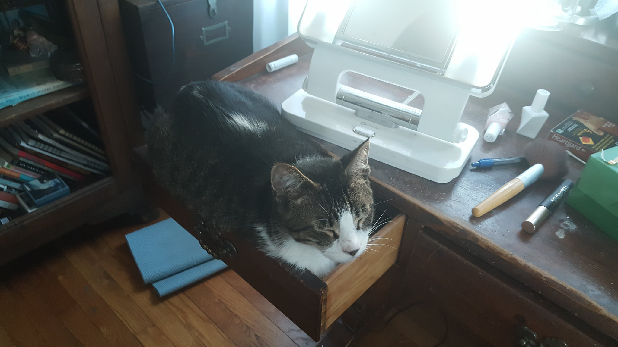 Ed decided the makeup drawer would be a good place to take a nap - while I was in the middle of putting on makeup.