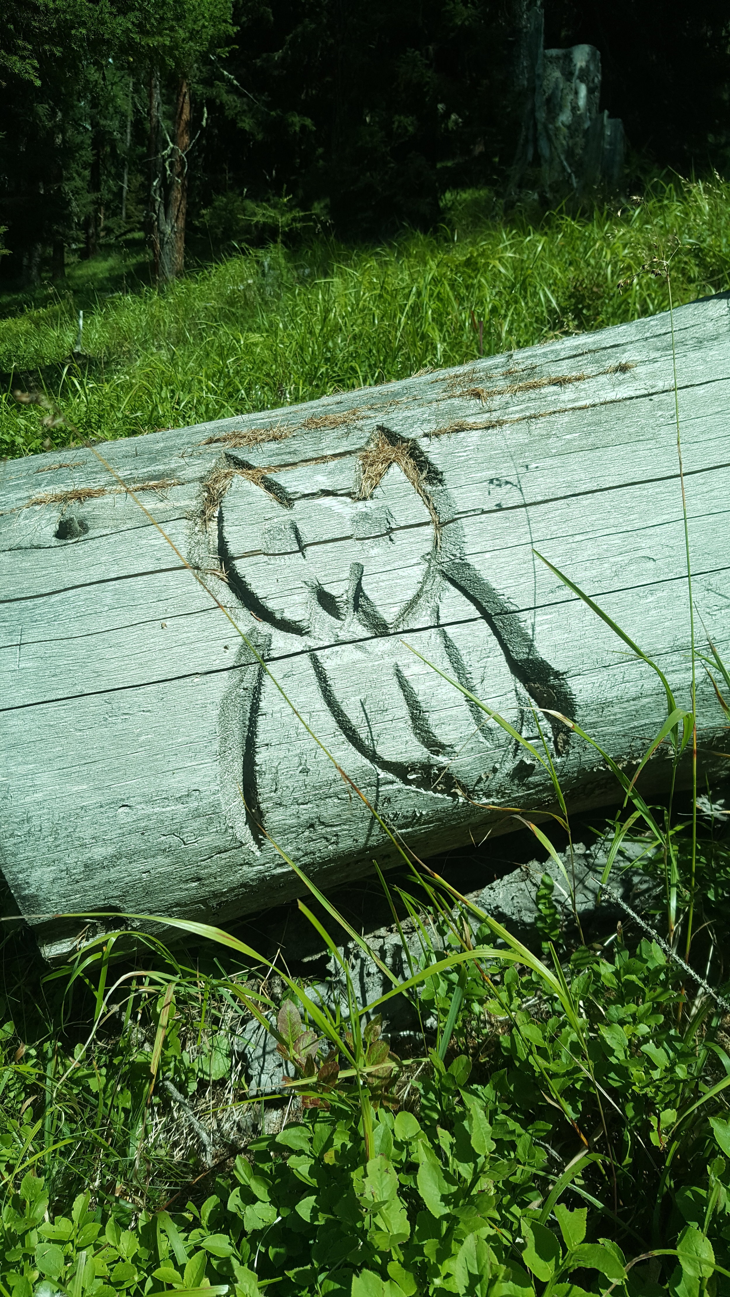 Cat art on the trail.