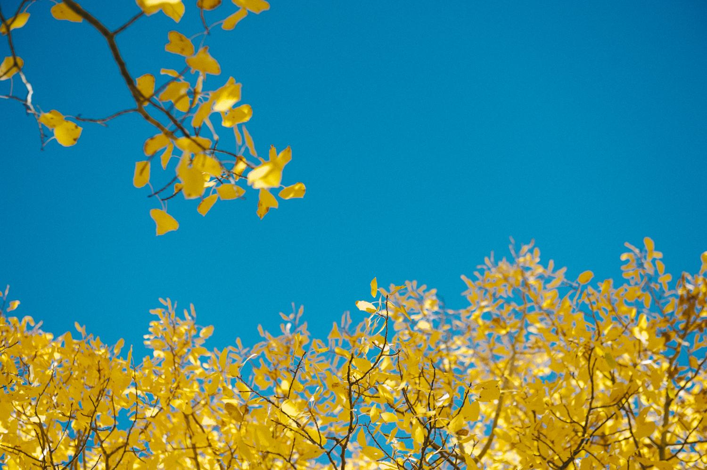 fall-9.jpg