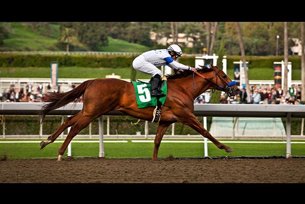 Santa Anita, horse race, Jeffrey Nelson Photography