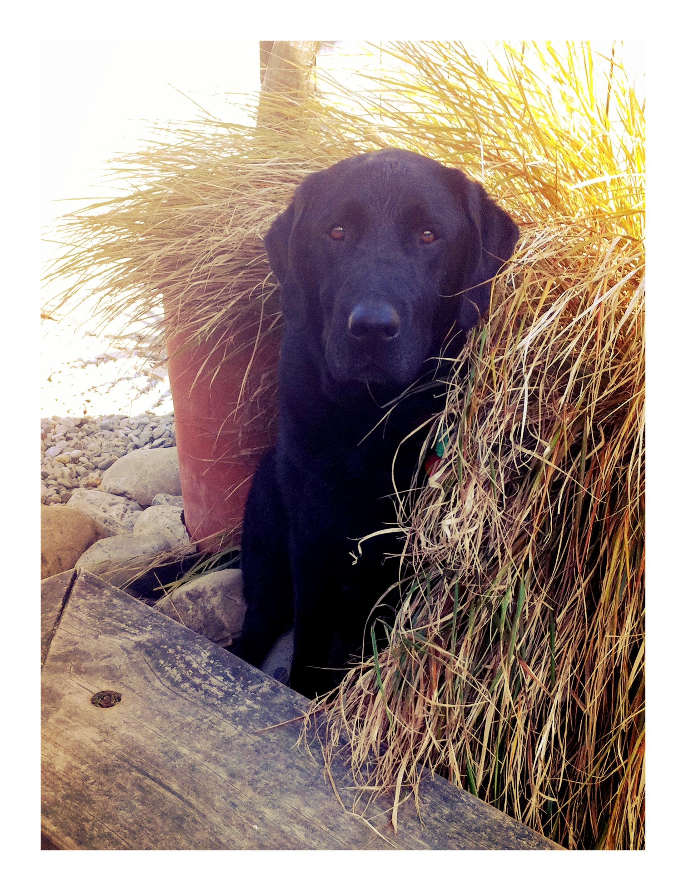Sirius puppy.jpg