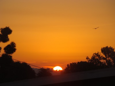 Sunrise as a bird soars over Los Angeles from Mar Vista   Unless I accept my faults, I will most certainly doubt my virtues. …Hugh Prater