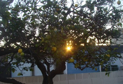 Sunrise through the lemon tree in my own backyard at 59th Place and Brynhurst in LA.   Energy is life force, our natural power or strength. It resides in our breathing. When our breathing changes, our emotions change, our movements change, and our perception of the world changes accordingly. When our vital energy is obscured by strong emotions, opinions, and concepts, our perspective narrows and our strength diminishes. When we are free of such blockages, our power is free and expansive. …Irini Rockwell
