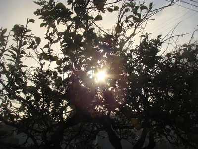 ...and then the sun burst through the lemon tree out back....Alleluia