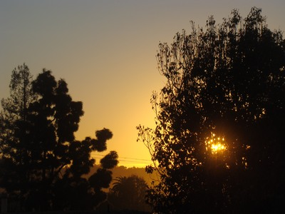 Sunrise so bright had to be caught through a tree in Mar Vista. February 12, 2015 has never happened before. It happens now, today happens NOW.    Let us learn, then, from those in search of what they have not been able to find and hold in the press of humanity around them: peace of mind, gentleness of heart, calmness of spirit, daily joy. Those who are mastering the art of flying solo and soaring to their highest human potential. Who have come to understand that to know and to love and to be of value to others, they first must know and love and value themselves; that to find their way in the world, they have to start by finding themselves. …Lionel Fisher