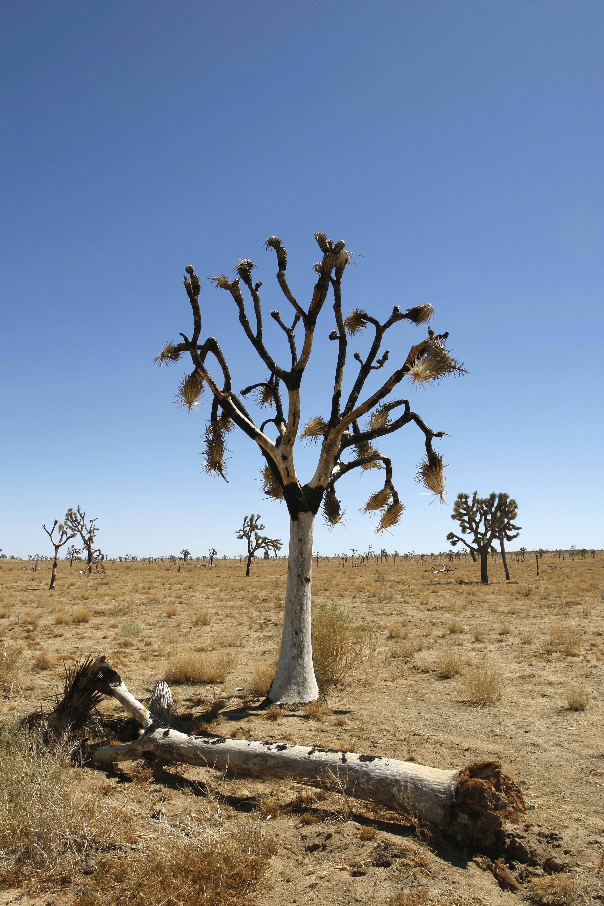 Joshua Tree National Park - Mohave Desert - California