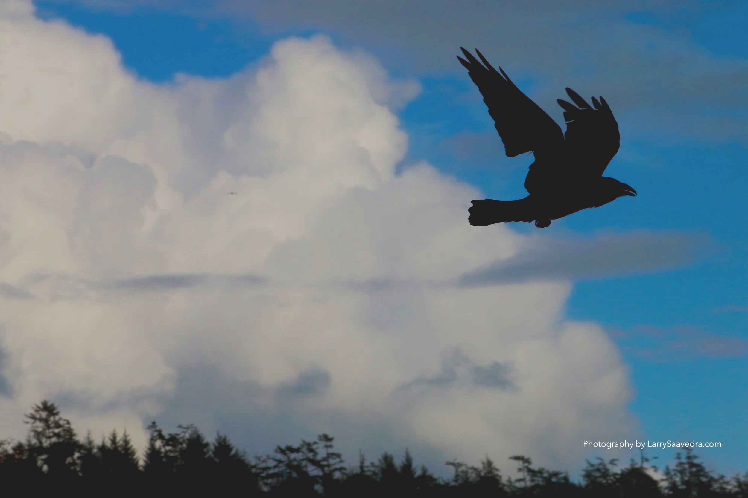 The raven. Native people call him the Teacher of Knowledge.The raven is notes as placing the sun in the sky and fish in the sea. Imagine taken at Combers Beach in Vancouver BC. 500th sec at f16 400asa