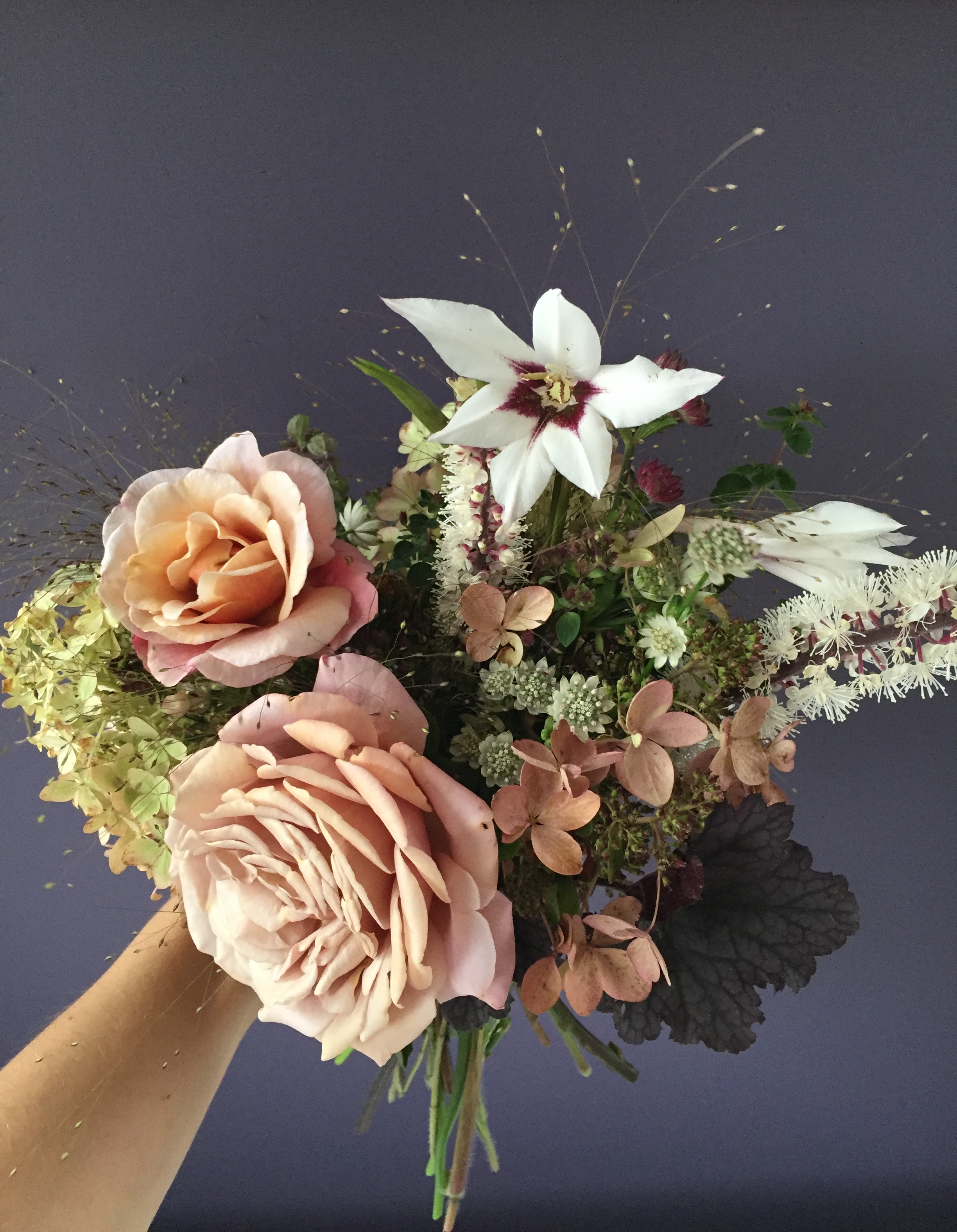 Early October - roses, hydrangea, heuchera, astrantia, actea, acidanthera, oregano, frosted explosion grass,