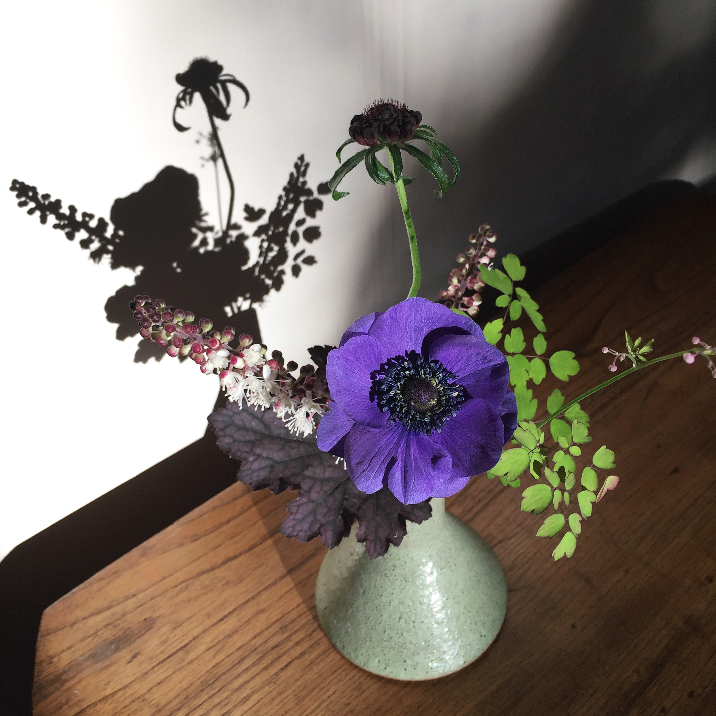 Early October - anemone, heuchera, actea, thalictrum, scabiosa