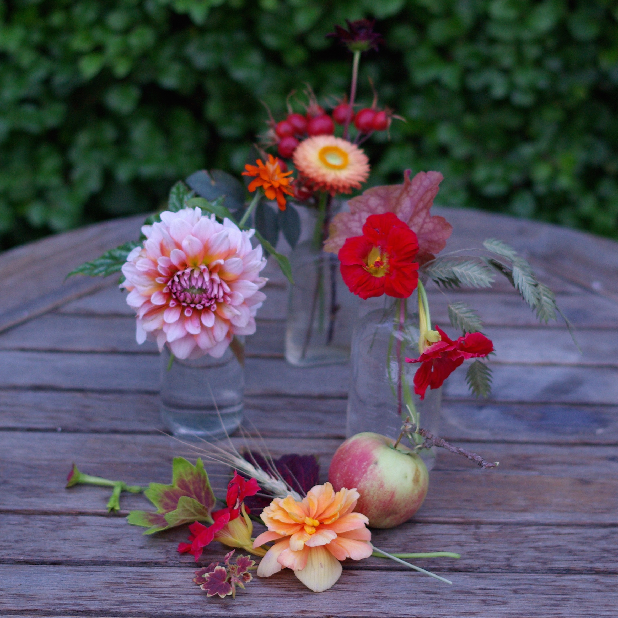 Early September - pelargonium, nasturtiums, dahlias, apples, coleus, nicotiana, begonias, Chasmanthium latifolium, cornflower, zinnia, rosehips, wheat, chocolate cosmos, heuchera