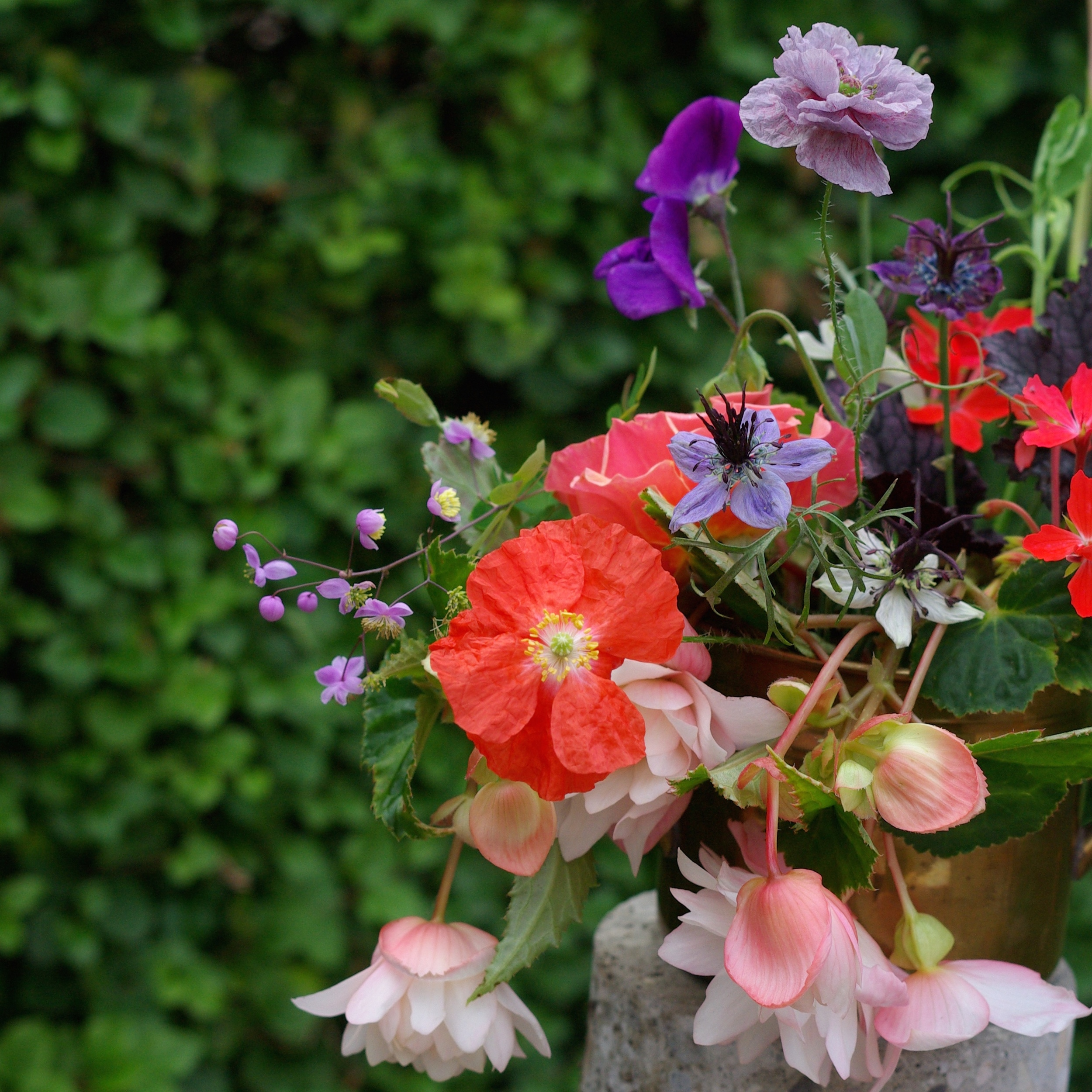 Late August - begonias, poppies, thalictrum, nigella, heuchera, sweet peas, pelargoniums, roses