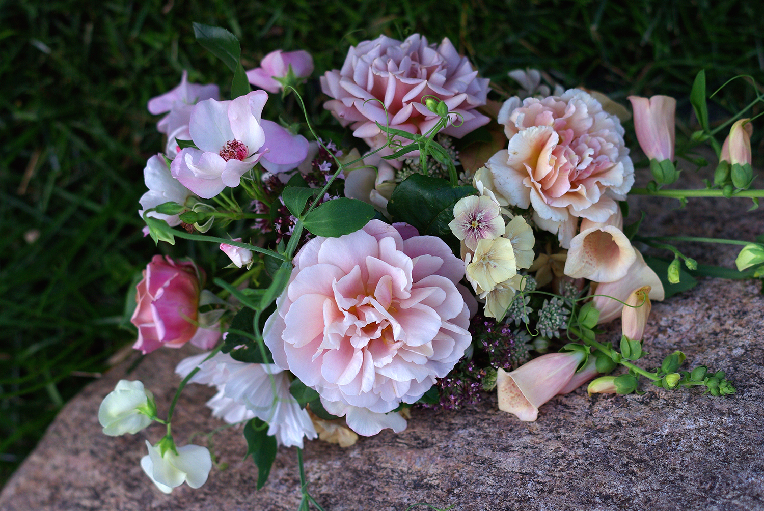 Late July - the first real flush of roses (!), sweet peas, cosmos, oregano, astrantia, phlox, foxglove
