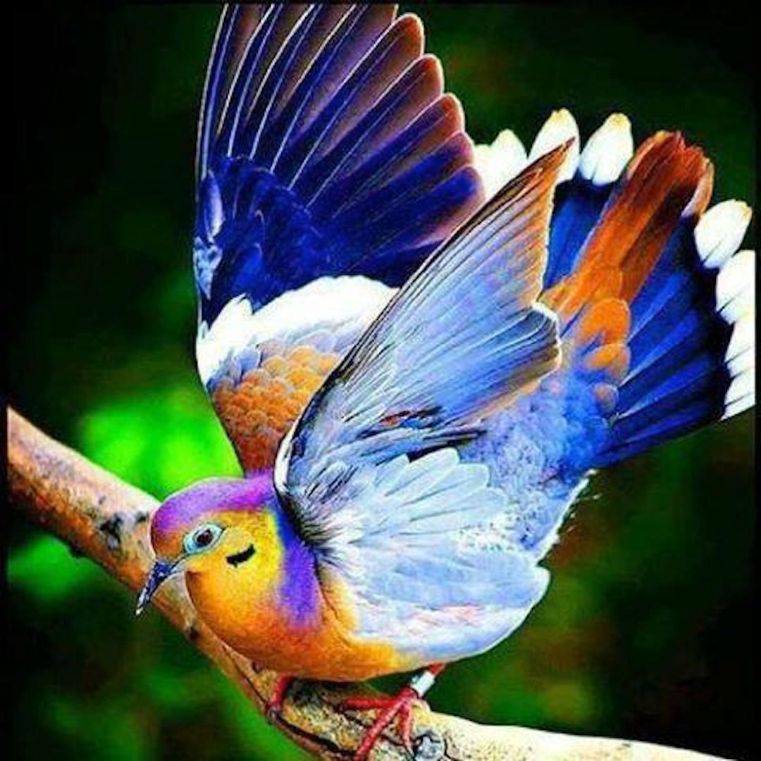 pretty birdy.jpg