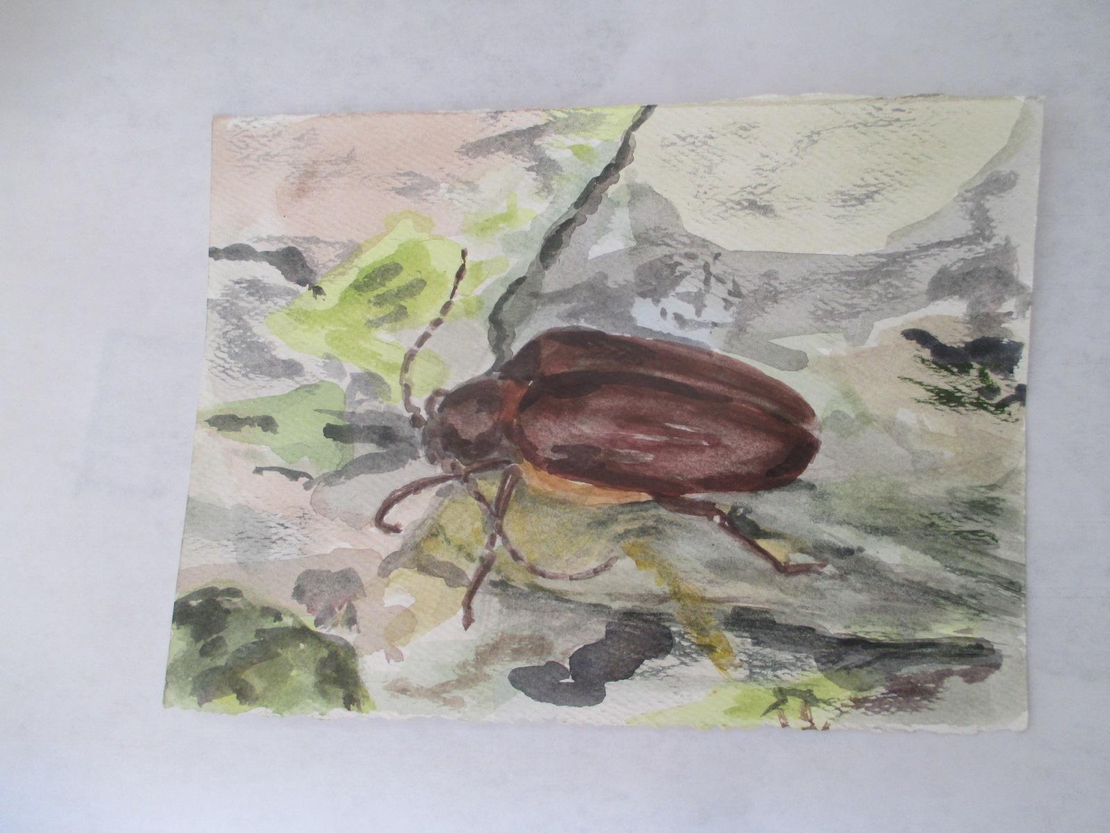 morocco nature study beetle 2003?.jpg