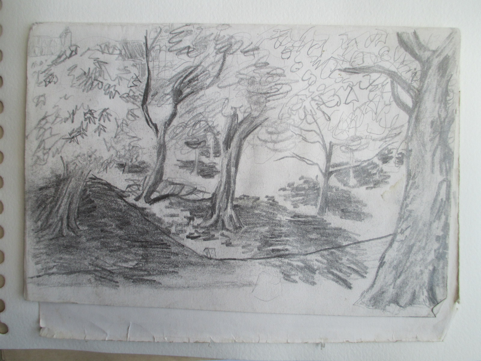 woodland, probably england or scotland.jpg