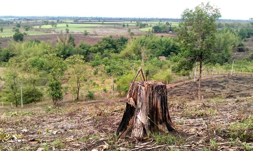 從這處山頭望去,山坡下一片樹林小綠意,也曾是被火焚栽種的甘蔗園。