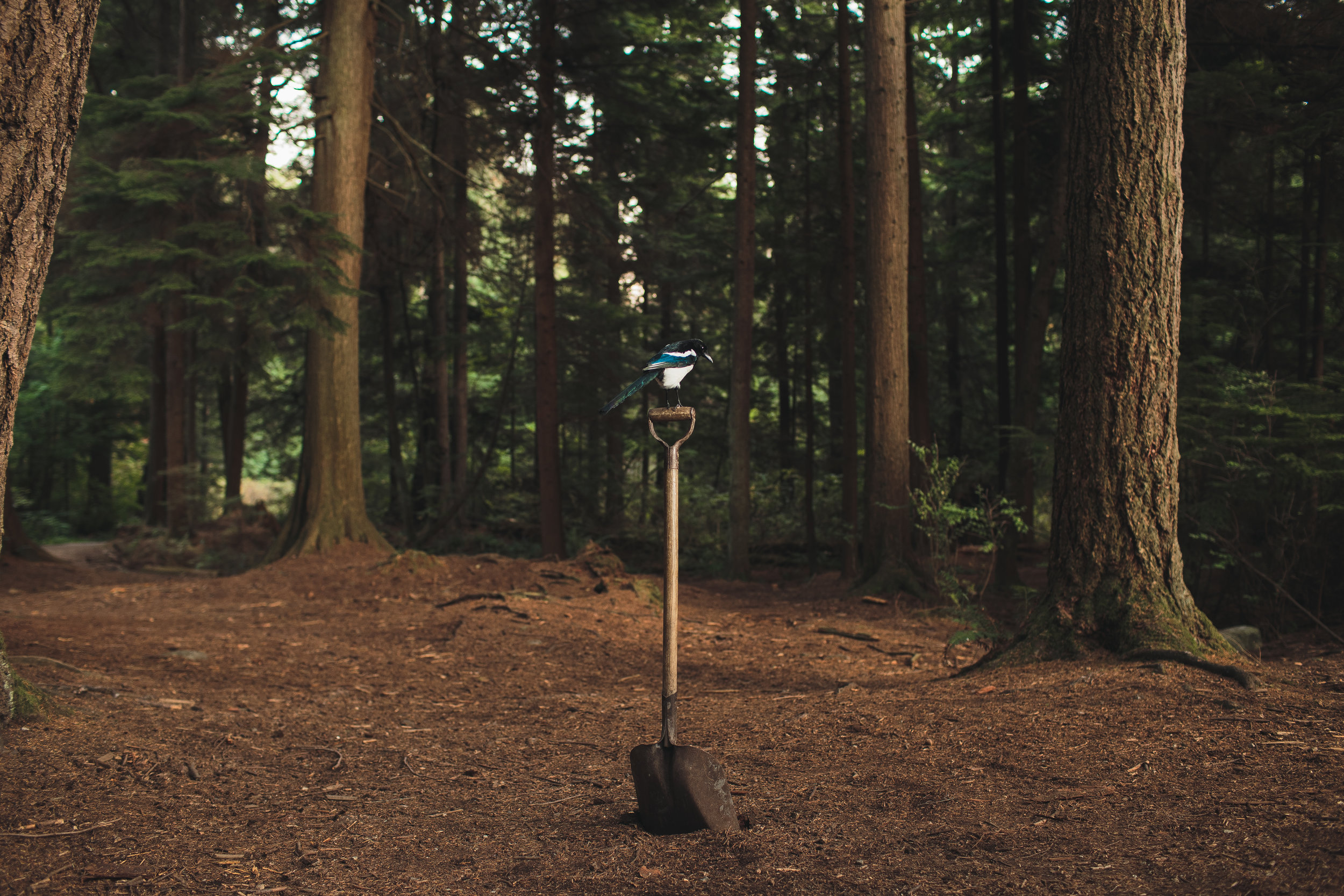 One for Sorrow , shovel, magpie, 2017. Image provided by Ballantyne.
