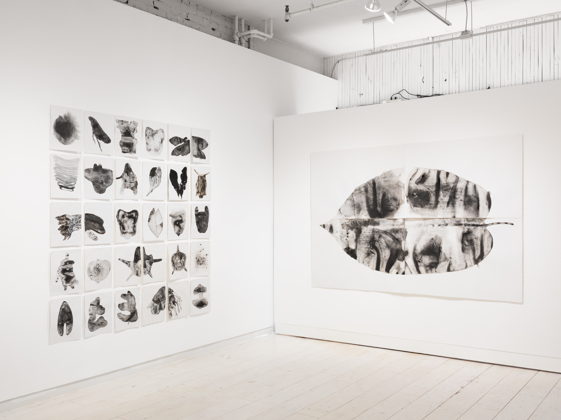 Installation view,  carbon study: walking in the dark  by Genevieve Robertson at Access Gallery. Photo by Rachel Topham.