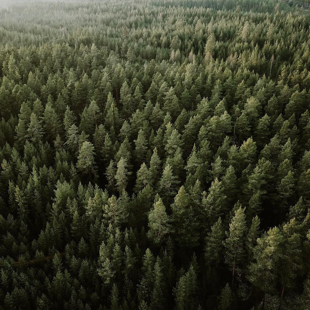sweden-nature.JPG