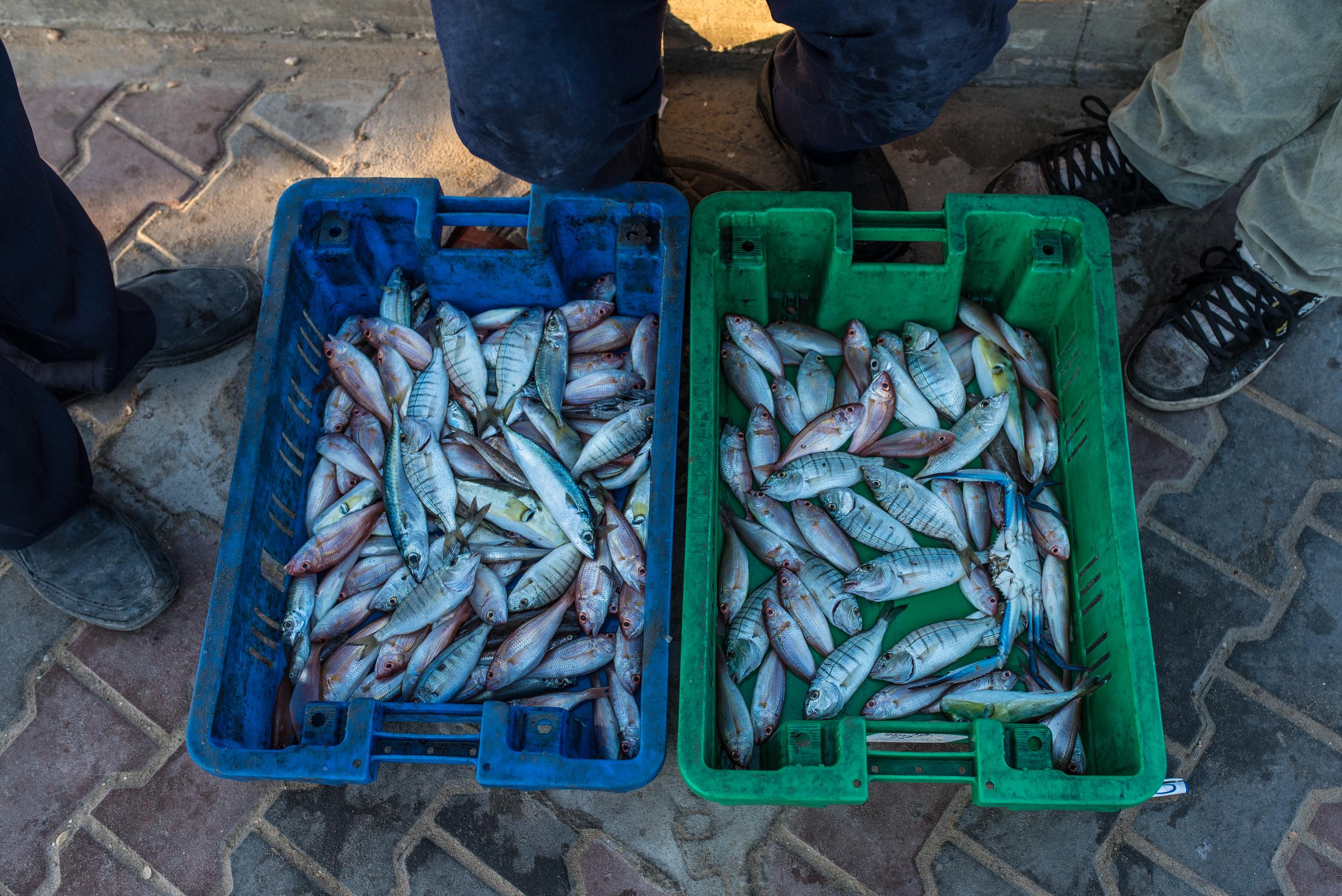 Gaza_Fishermen_0058.jpg
