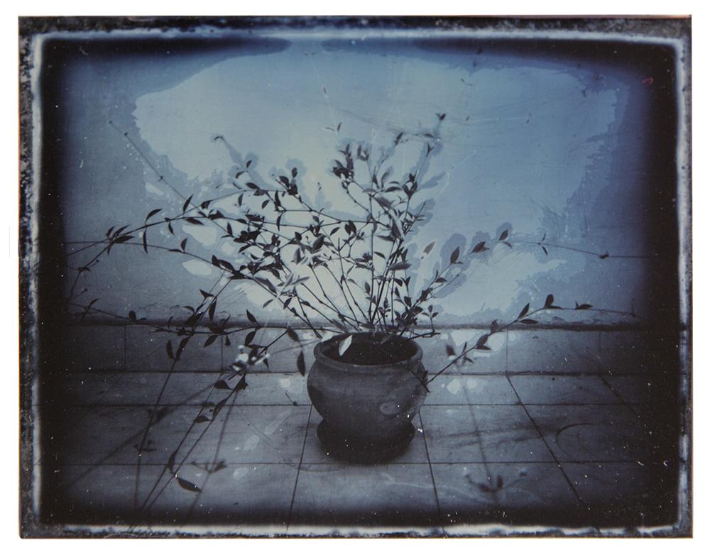 Dafna_Gazit,_Untitled,_Daguerreotype,_11X9cm,_2013.jpg