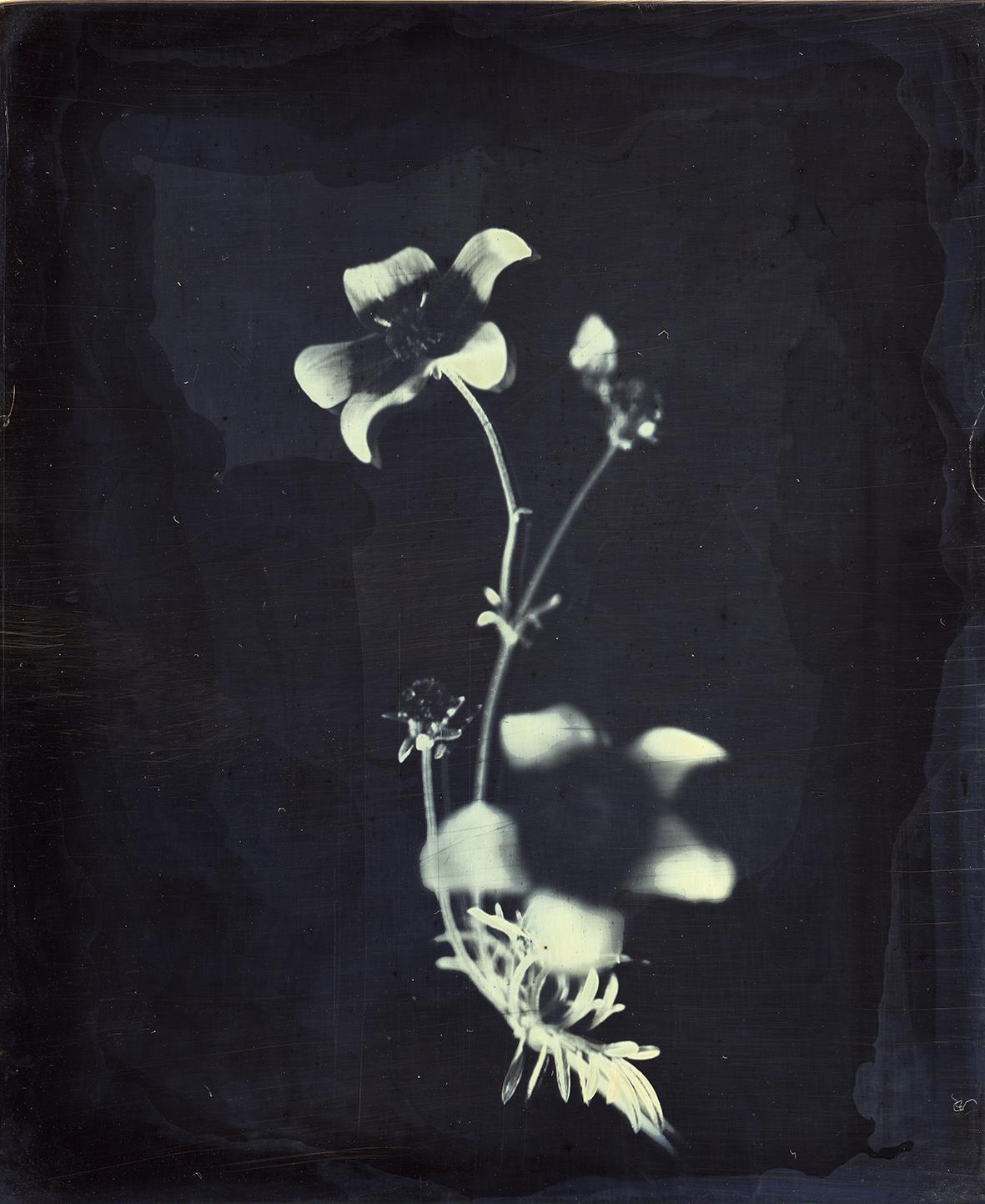 פרח, דפנה גזית.jpg
