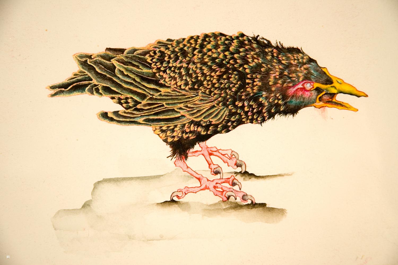 Big Fight (Bird) 1.jpg