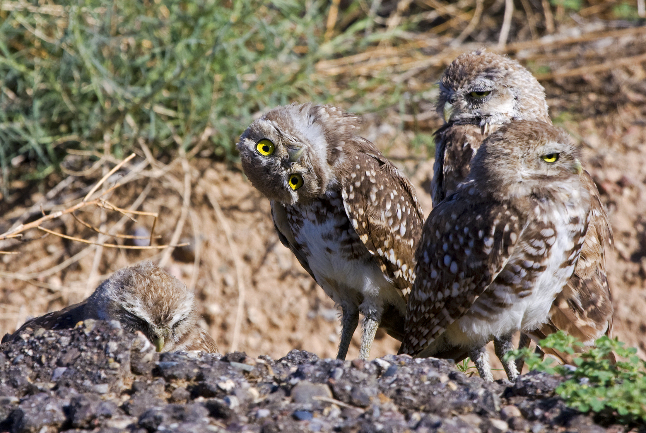 2 - Owls