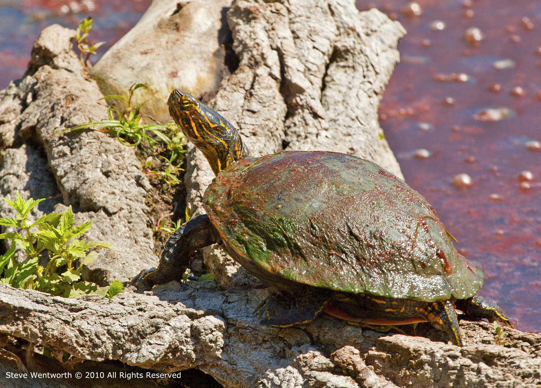 3 - Turtle