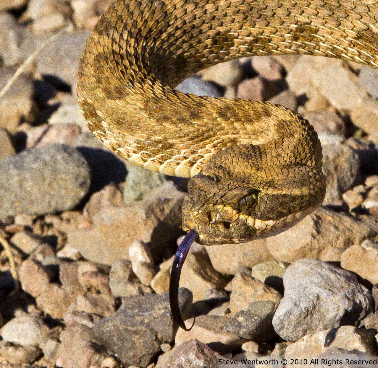 6 - Snake