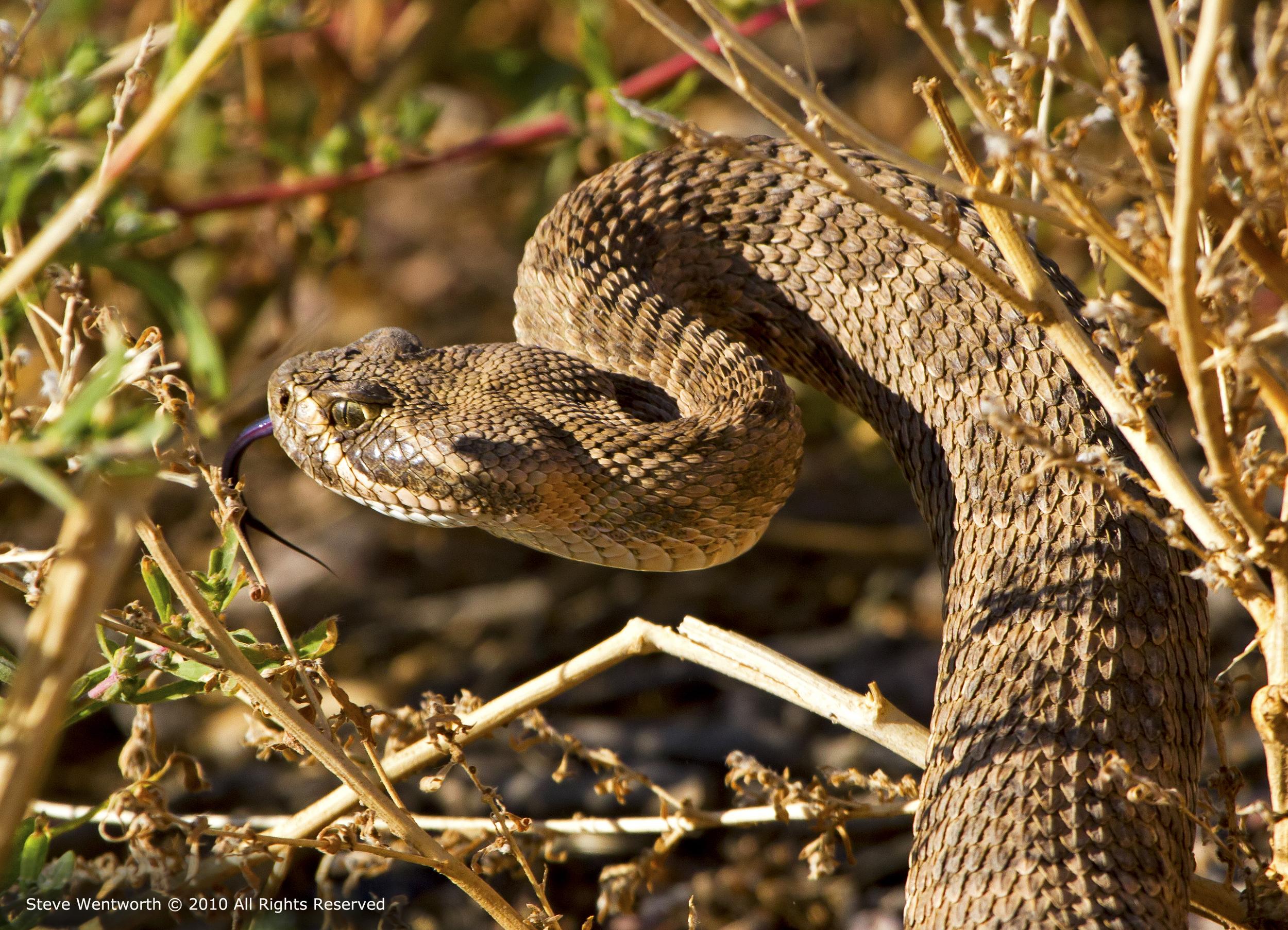 7 - Snake