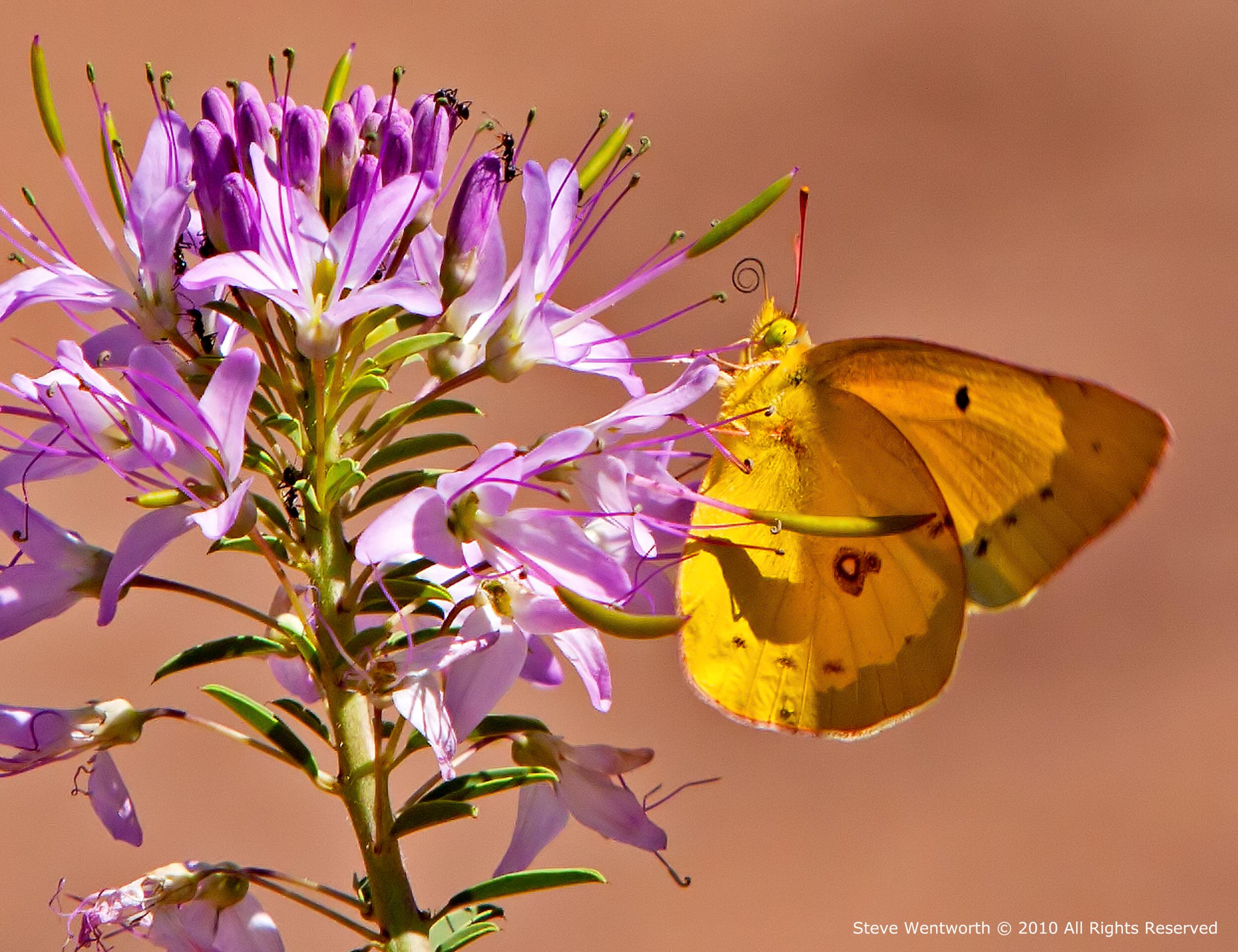 10 - Butterfly