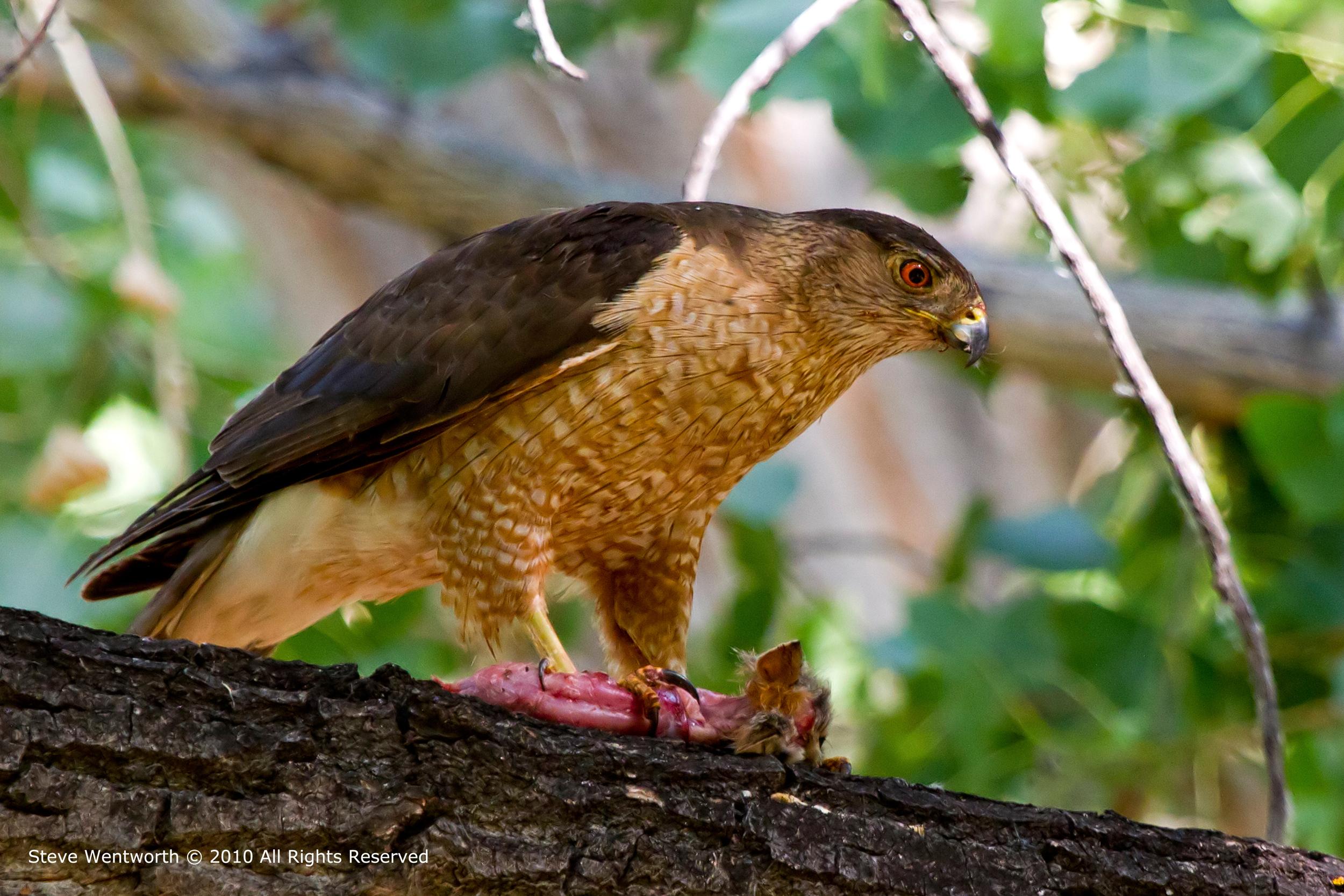 15 - Bird