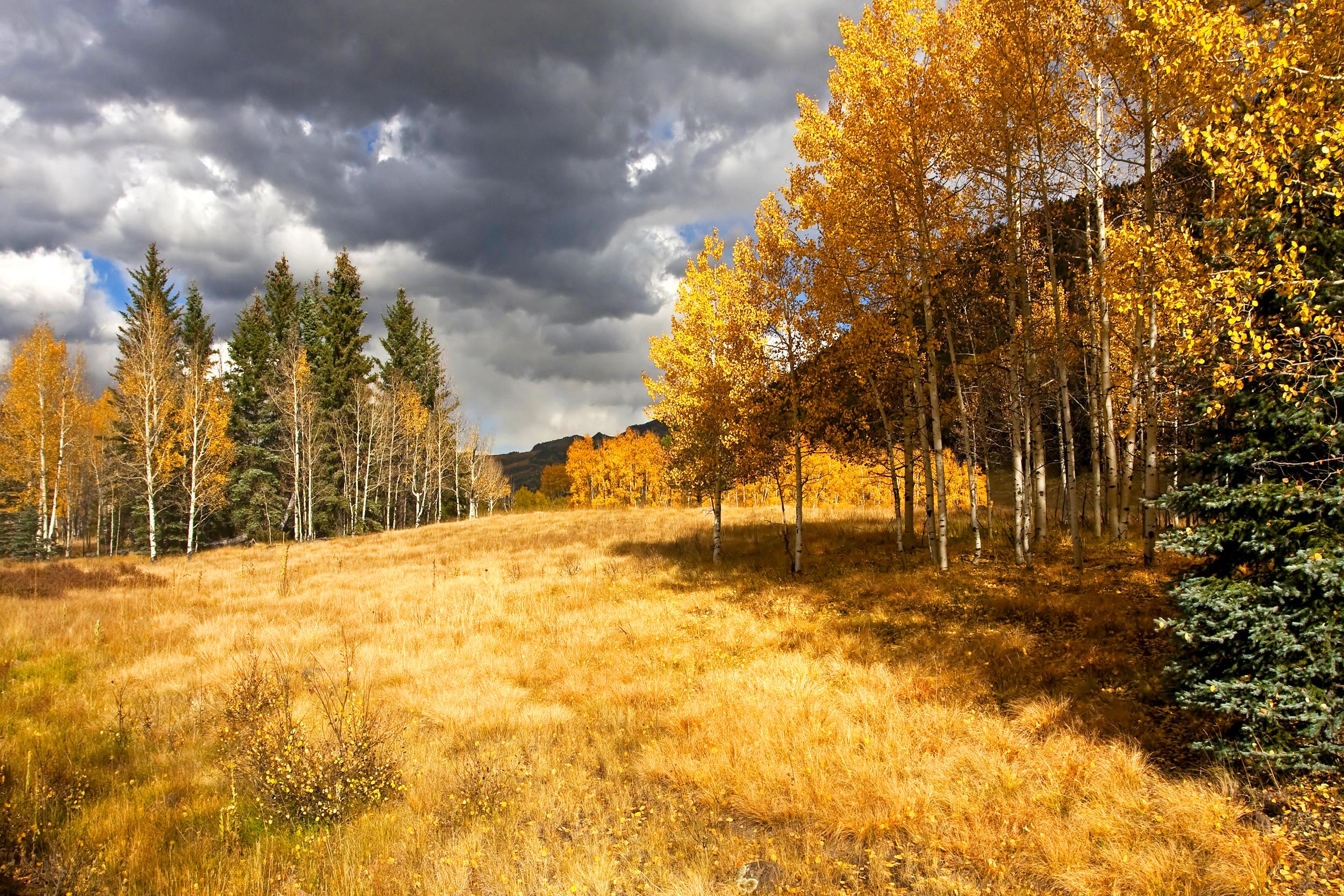 24 - Landscape