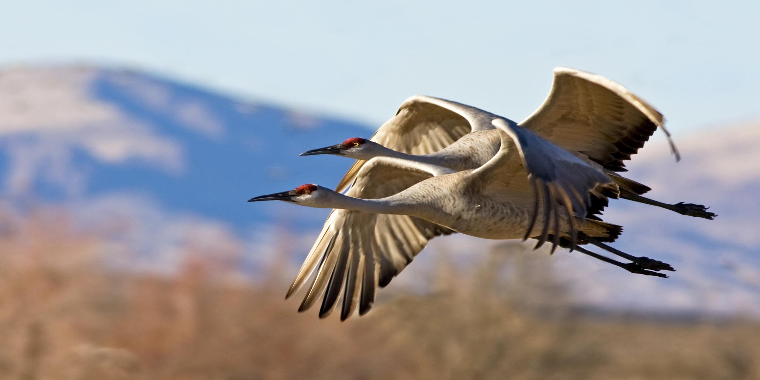 28 - Birds
