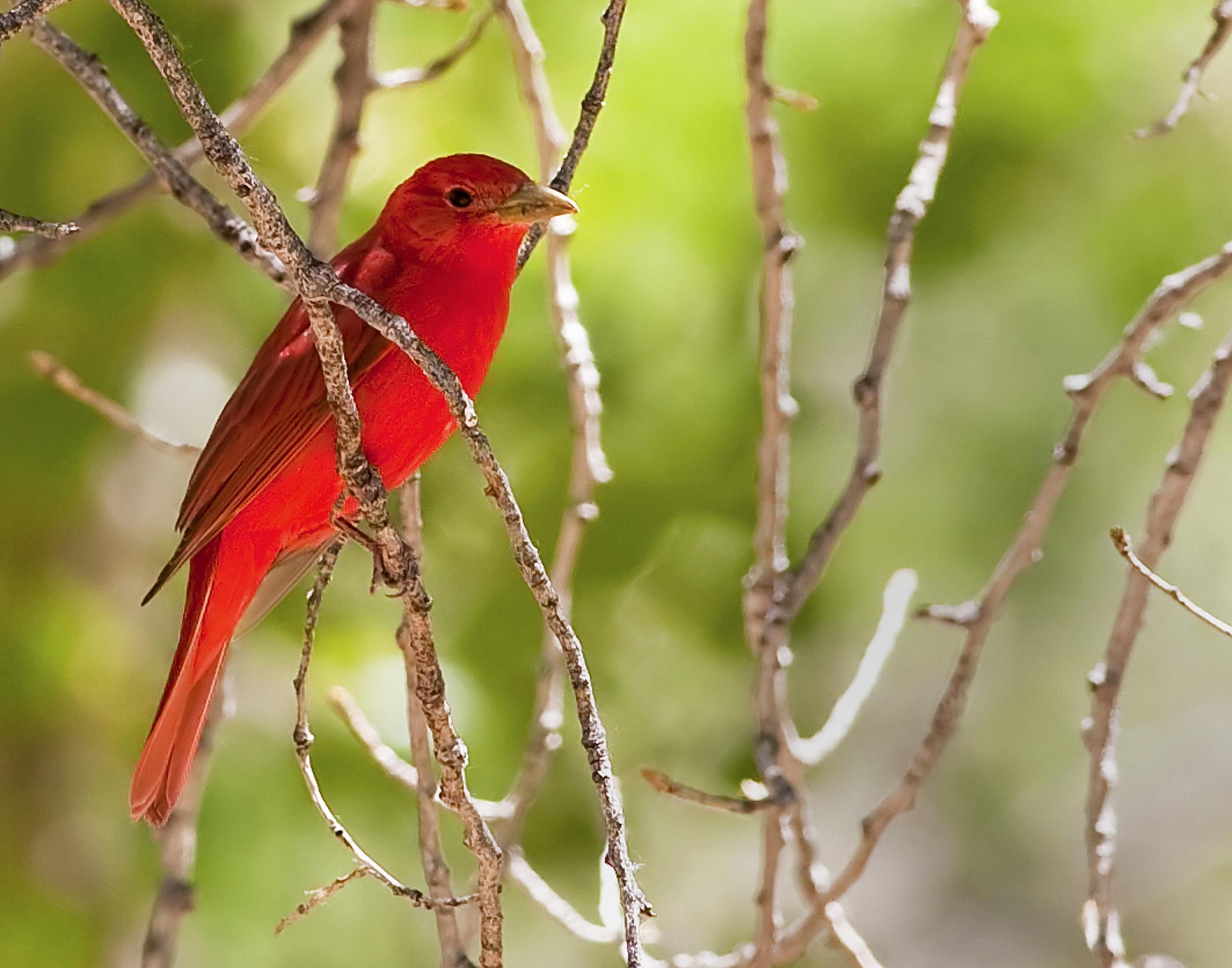 36 - Bird
