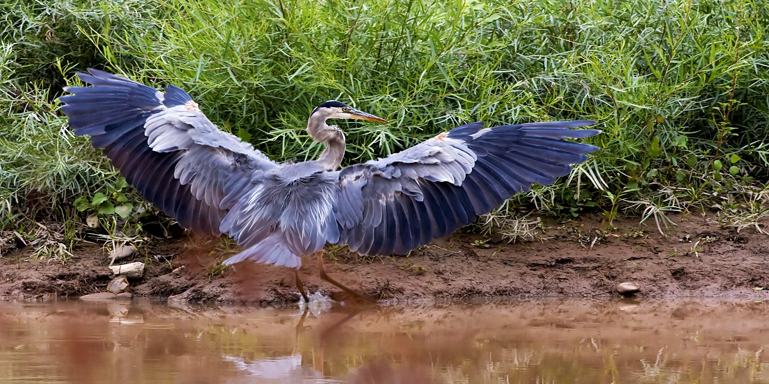 38 - Bird