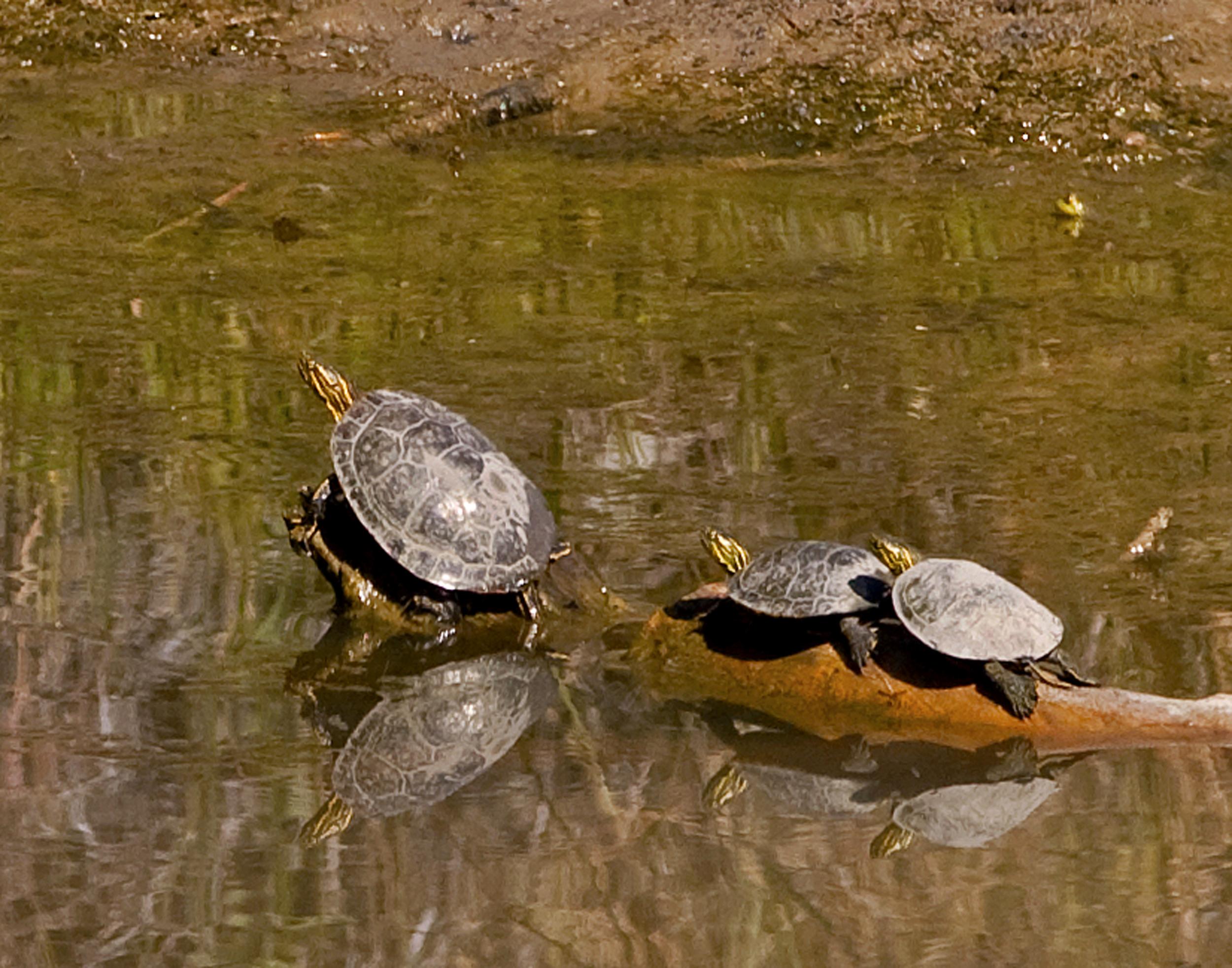 54 - Turtles