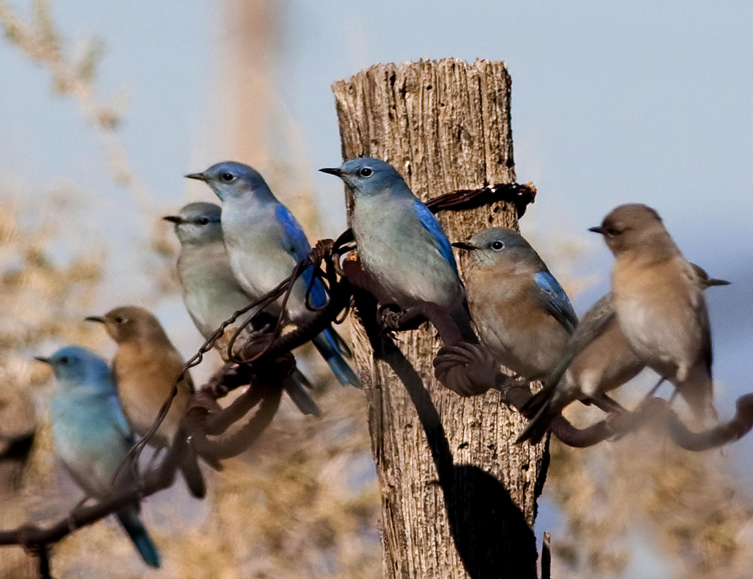 56 - Birds