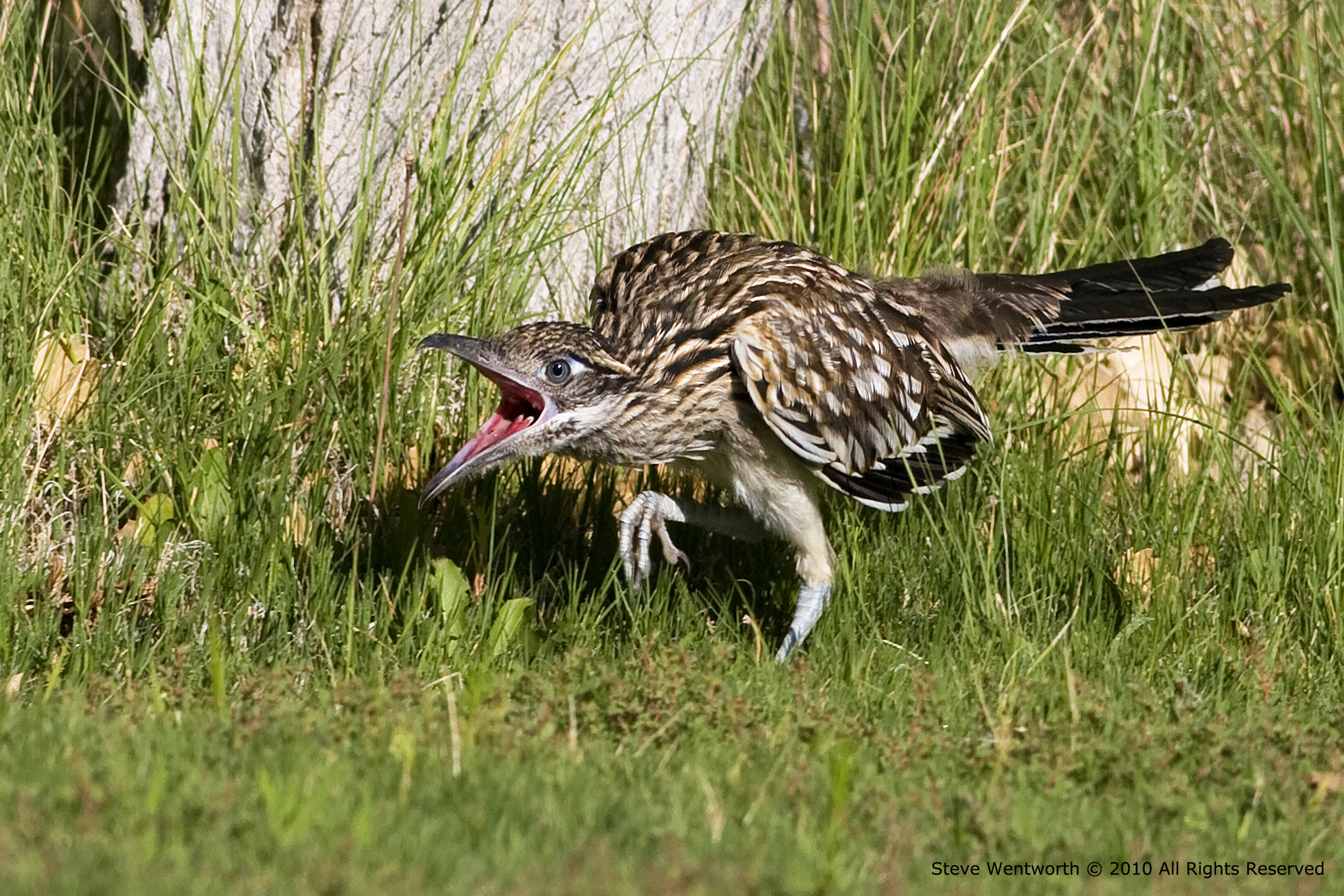 67 - Bird