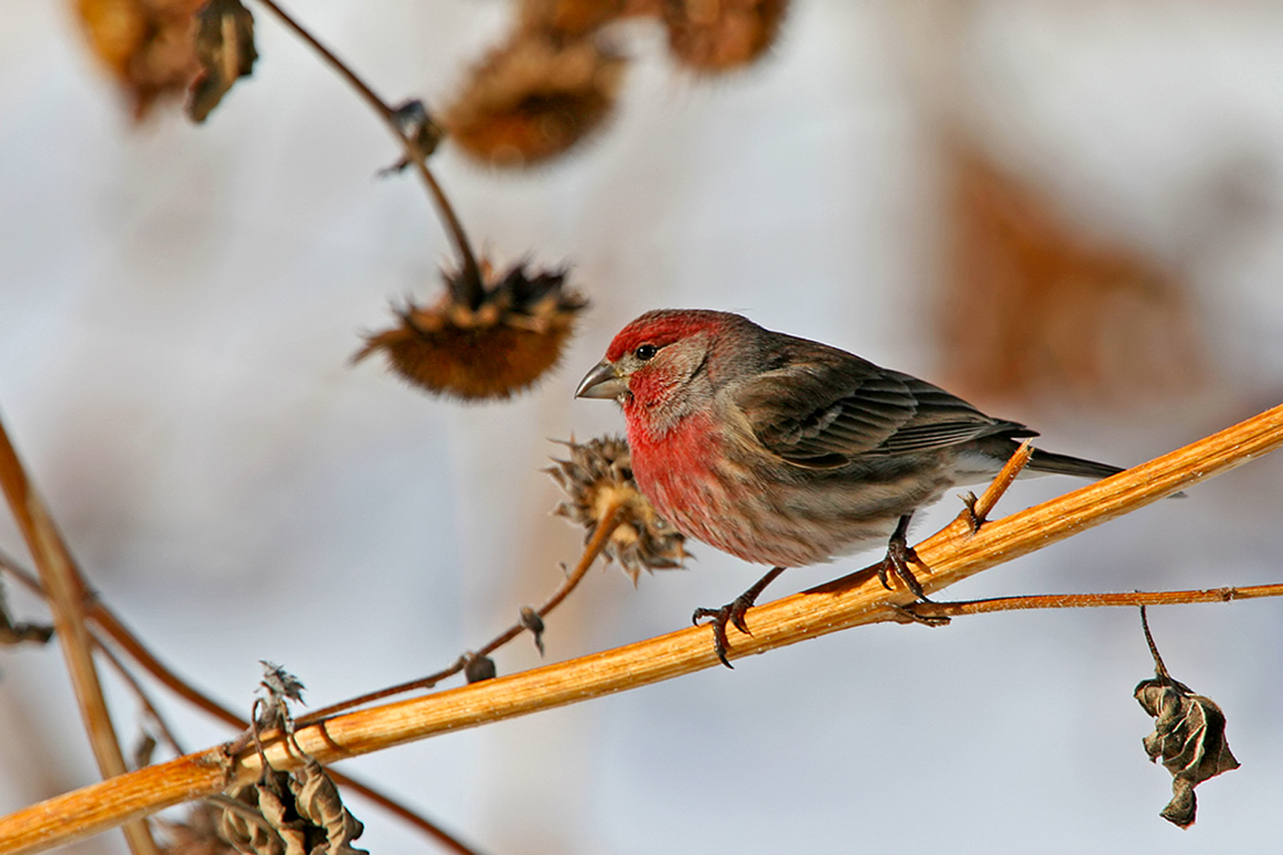 73 - Bird