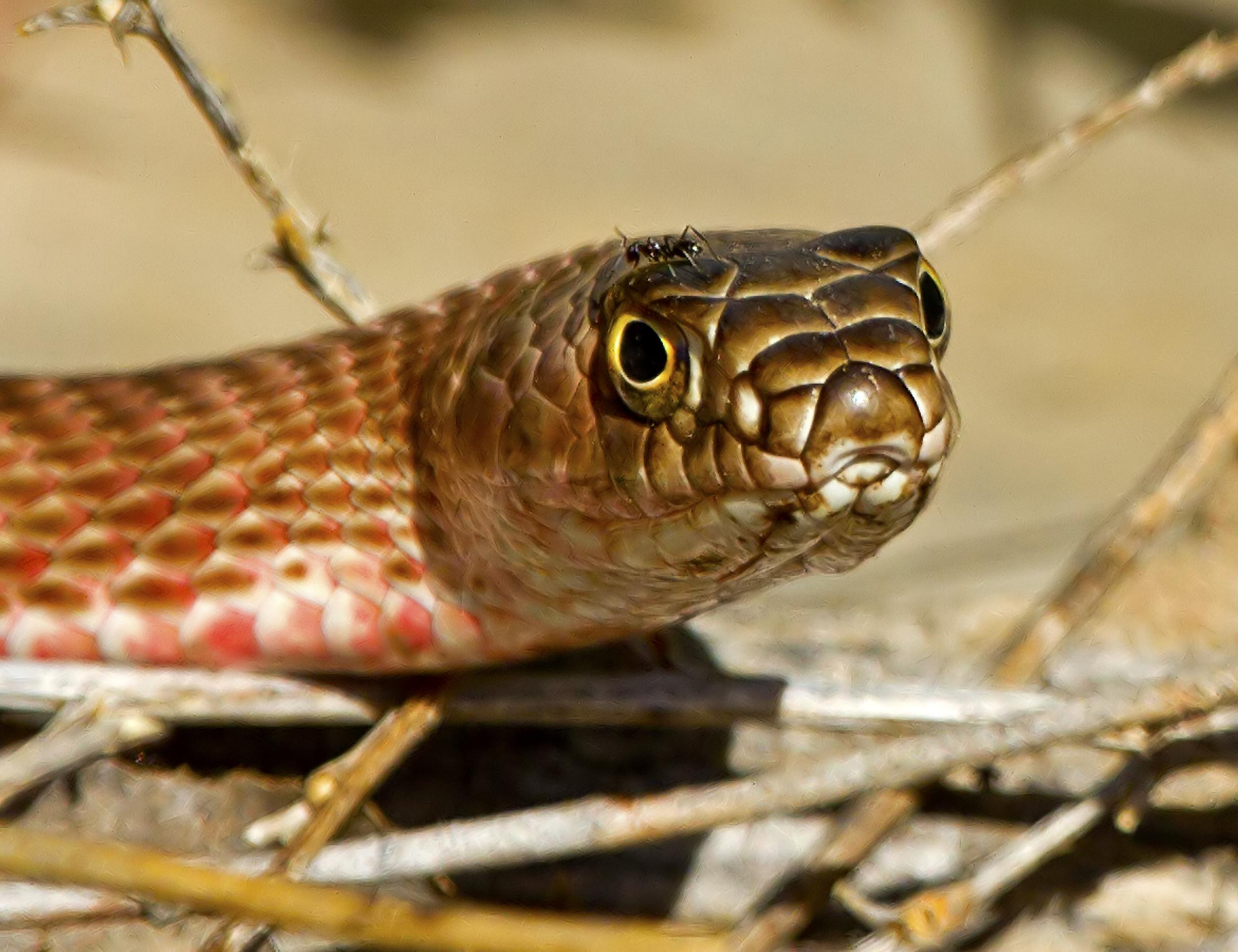 72 - Snake