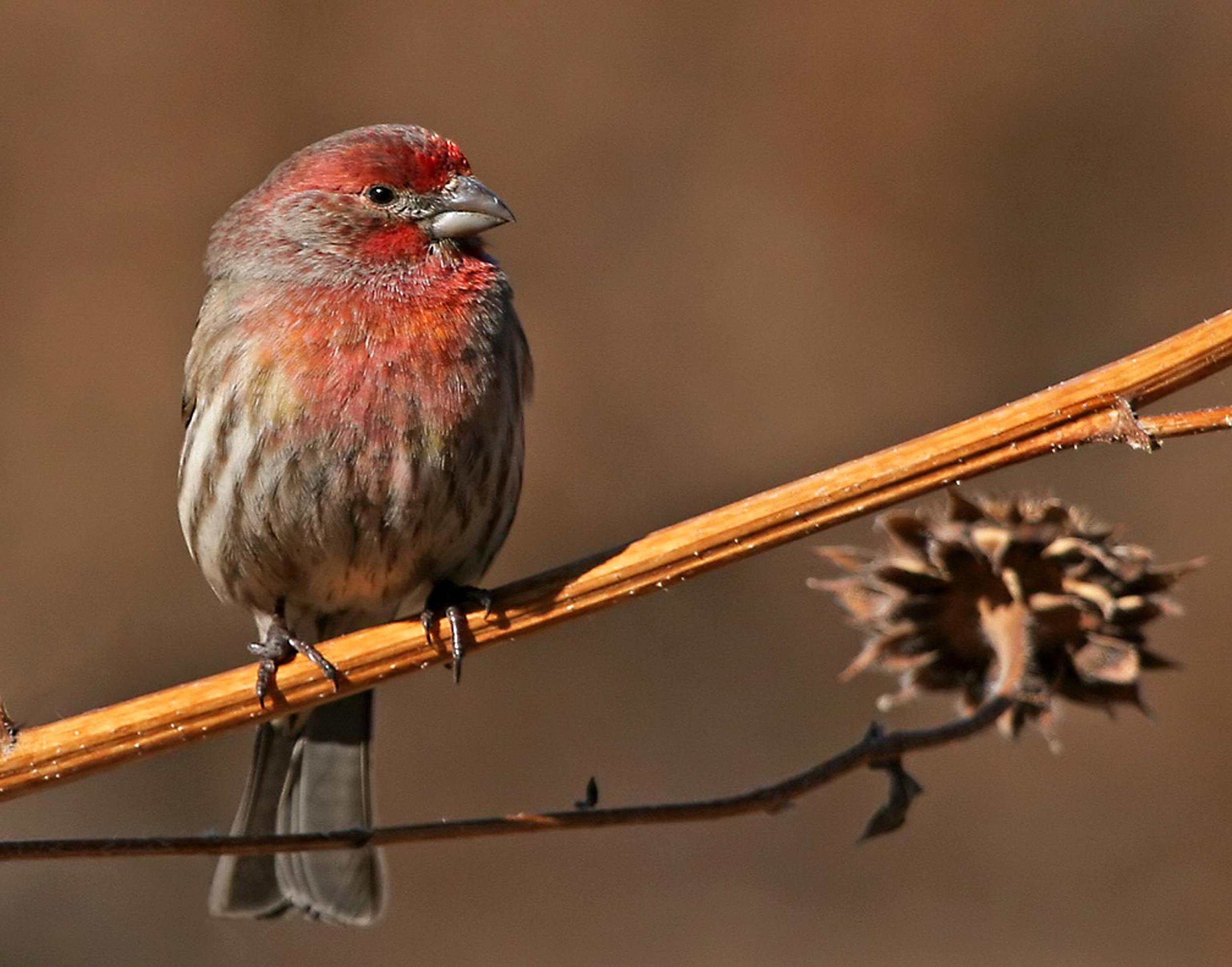 74 - Bird